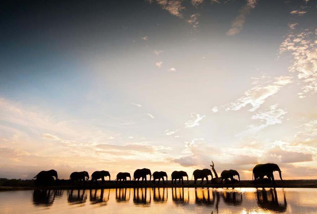 camp-jabulani-elephant-sunset-1-media
