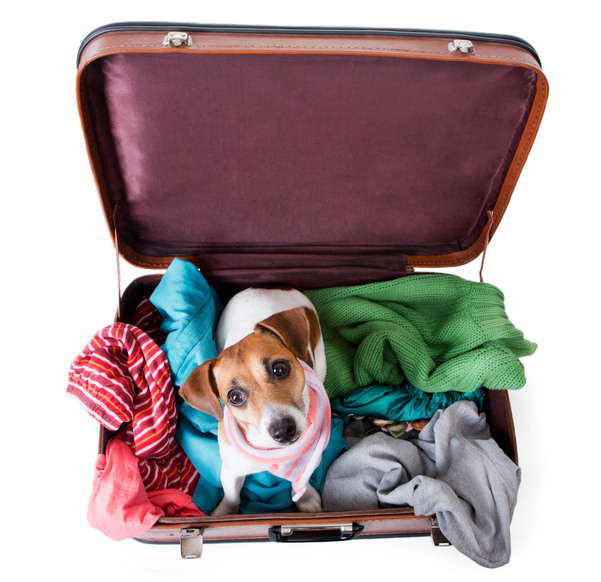 Pet with bag for traveling with brightly colored things inside of it with a stylish pink scarf around her neck. Take me with you on vacation. White background