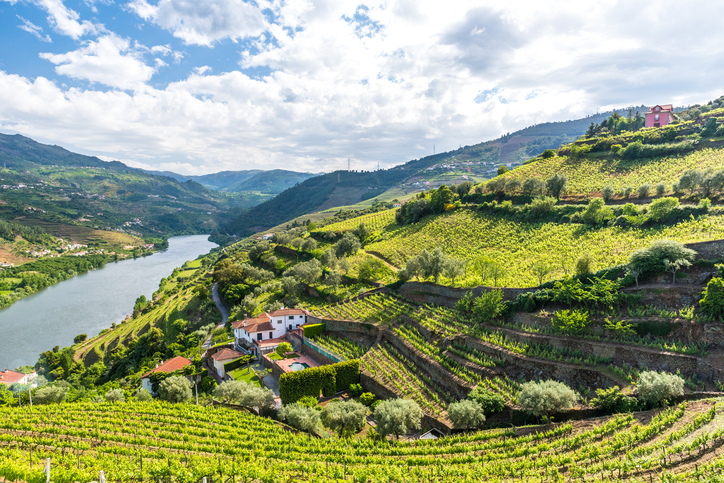 Beautiful Landscape of the Douro river region in Portugal -  Vineyards