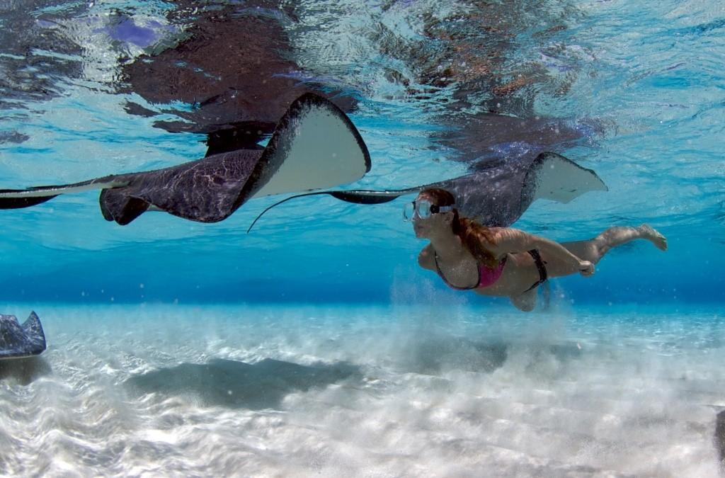 stingray-city-ilhas-cayman-credito-stephen-broadbelt