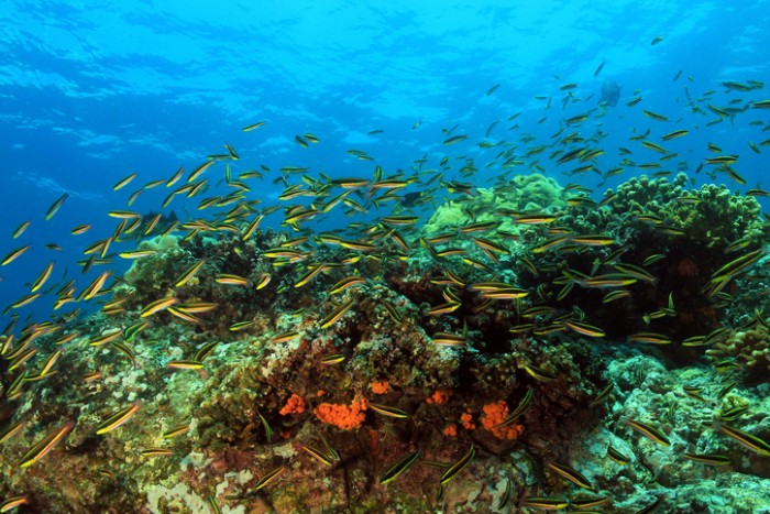 Foto por iStock / AndamanSE