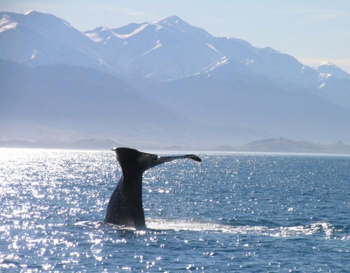 Foto por Whale Watch Kaikoura