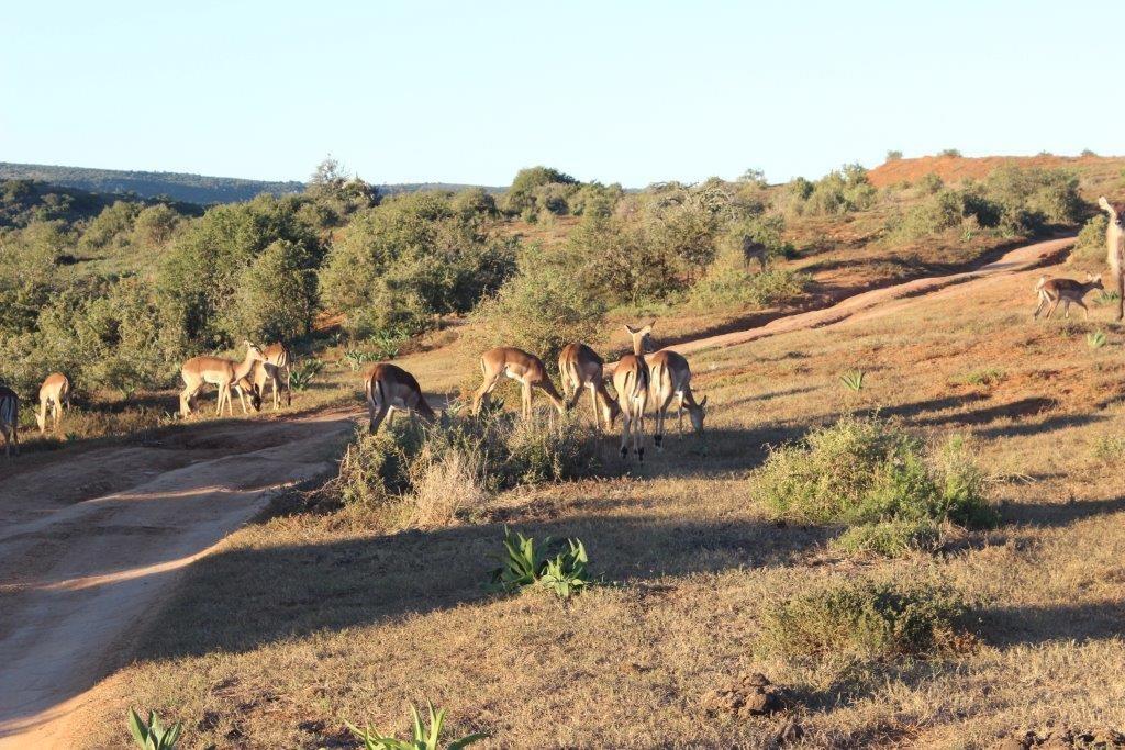 Safári na Amakhala Game reserve. Foto por: Fabíola Musarra
