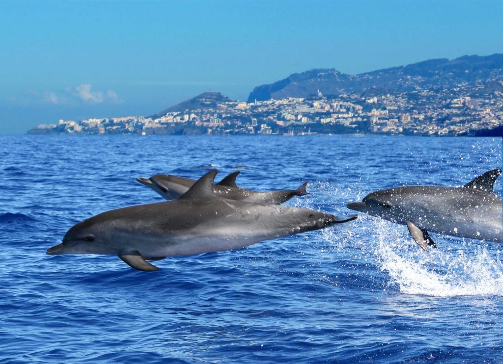 Foto via Divulgação/ Turismo da Madeira