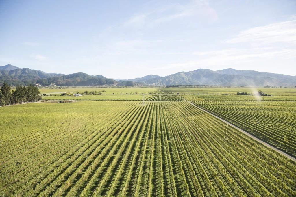 vinhos-e-frutos-do-mar-em-cloudy-bay-2