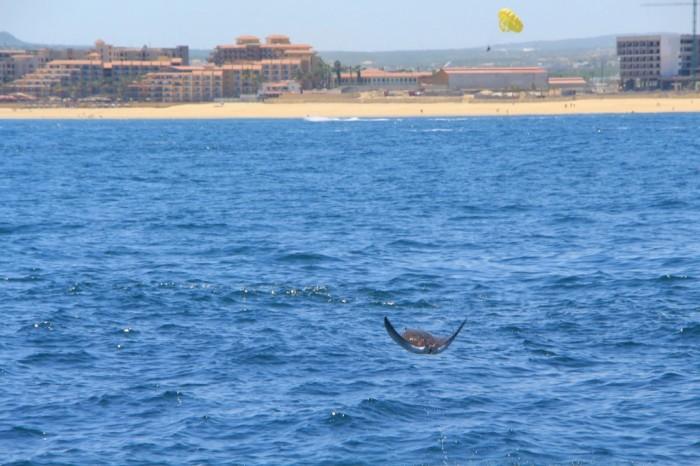 Foto por Cabo Adventures