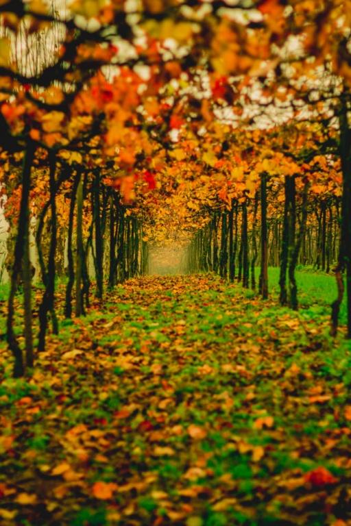 Foto por Slovinscki Fotografia via Divulgação