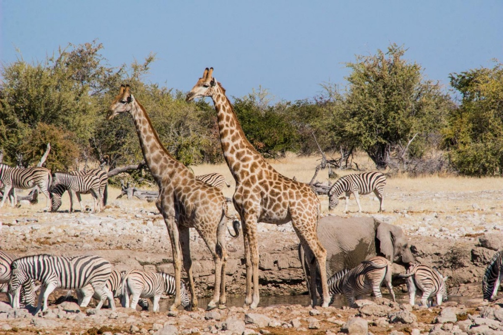 etosha_national_park_namibia