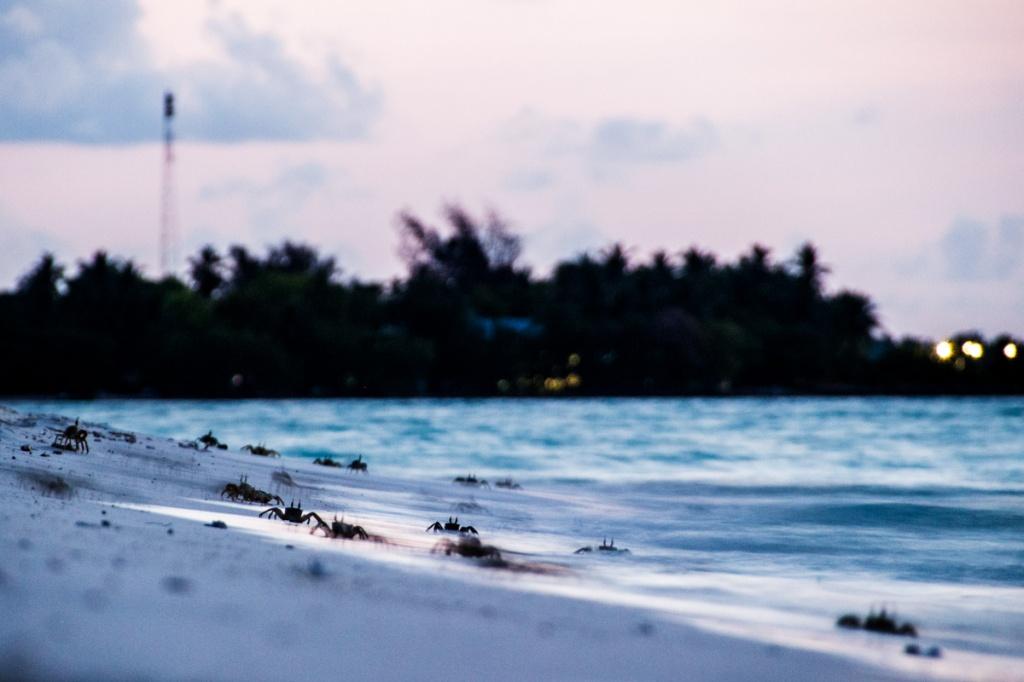 Caranguejos nas Maldivas - Foto: Elaine Villatoro