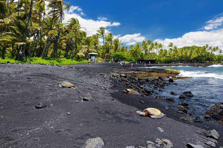 Hawaiian green turtles relaxing at Punaluu Black Sand Beach on the Big Island of Hawaii, USA