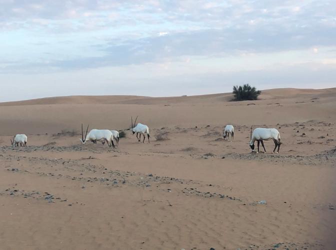 Safari em Dubai