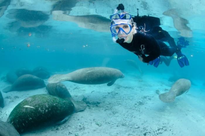 Foto por ©CGrant14/oceangrant.com / Discover Crystal River Florida
