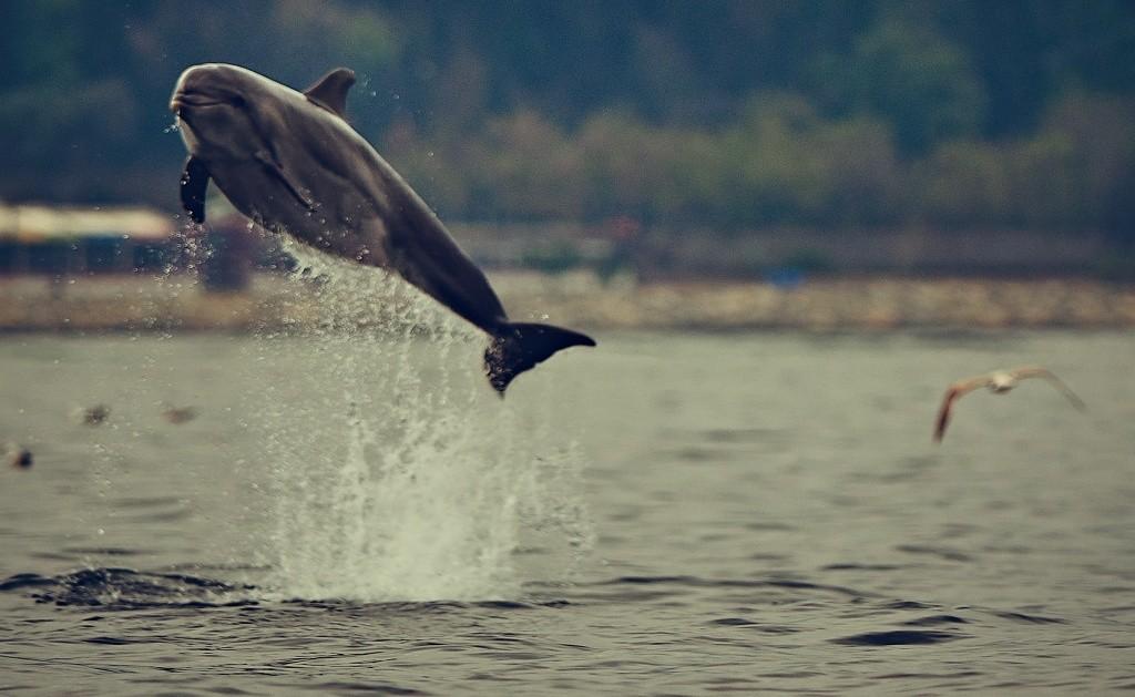 golfinhos Turquia