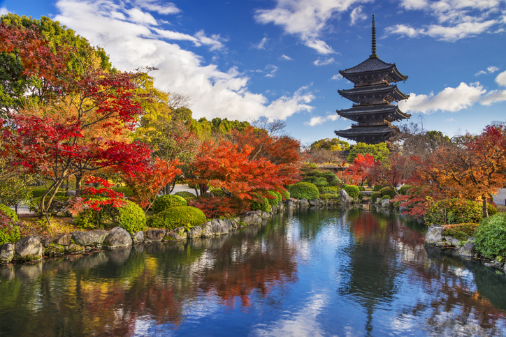 Kyoto, Japan - December 1, 2012: Toji Pagoda during the fall season. The pagoda is the tallest in the country.