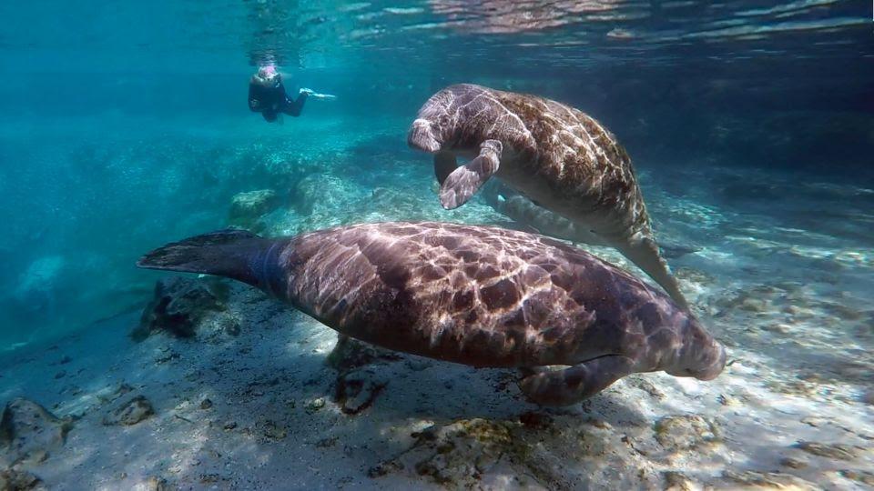 Foto por Maurice Rivenbark/Visit Florida