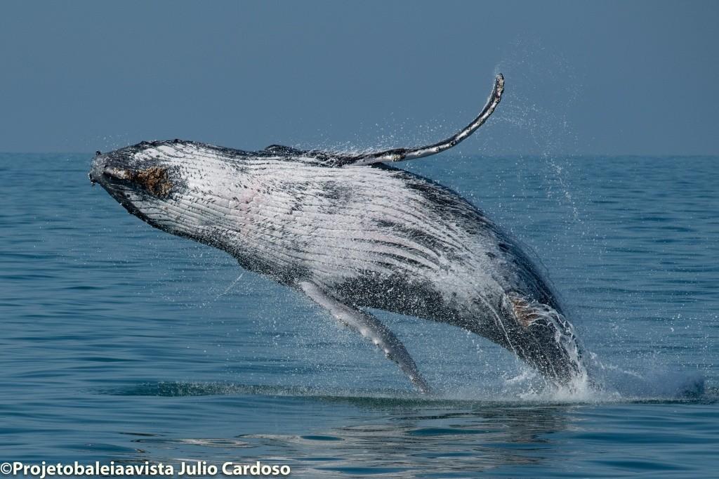 temporada-de-baleias-e-golfinhos