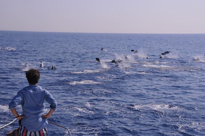 whale-watching-monaco