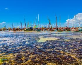 Foto: Wesley Menegari  via Setur Alagoas