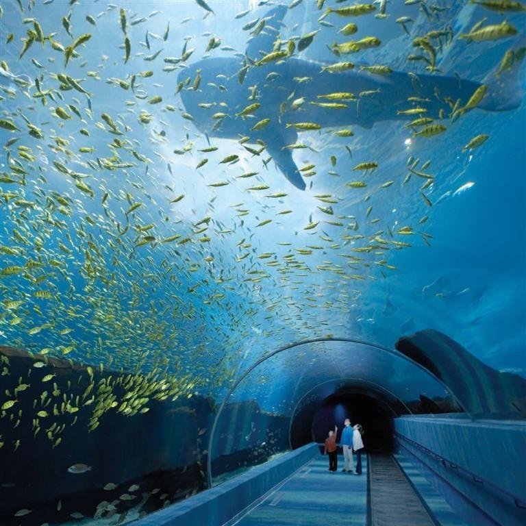 Georgia Aquarium in Atlanta (Large)