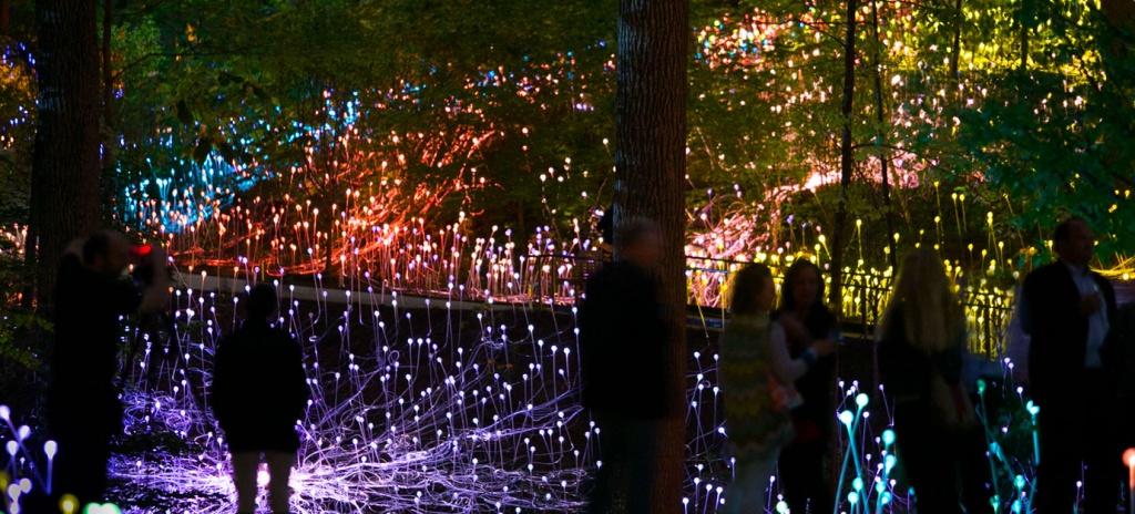 forest-of-light-jason-getz-042715