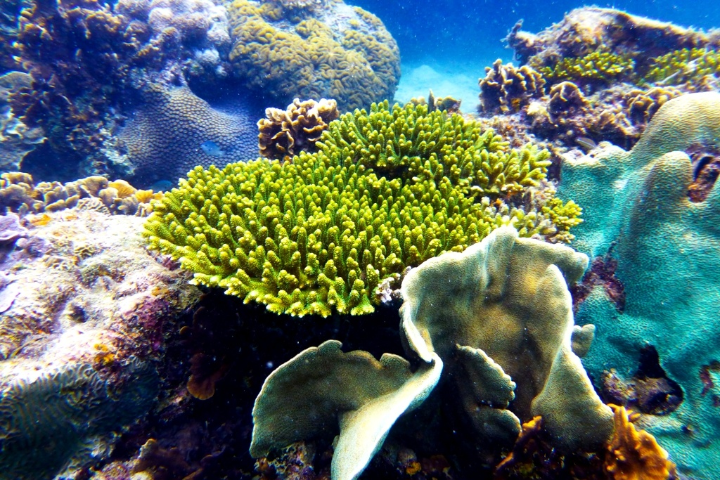Diving_Ko_Tao,_Thailand_1732 commons wiki