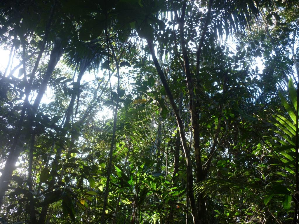 Explorando_a_floresta_amazonica,_Brasil