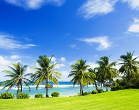 Bathsheba, East coast of Barbados, Caribbean - 46510684