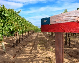 vineyard cabernet sauvignon from Chile
