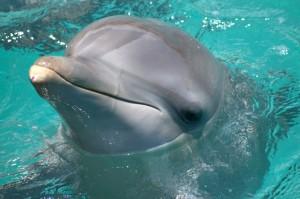 Seaaquarium  Foto por petertmp via IStock