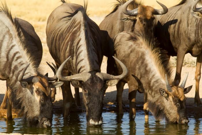 Safari to Kgalagadi Transfontier Park, South Africa