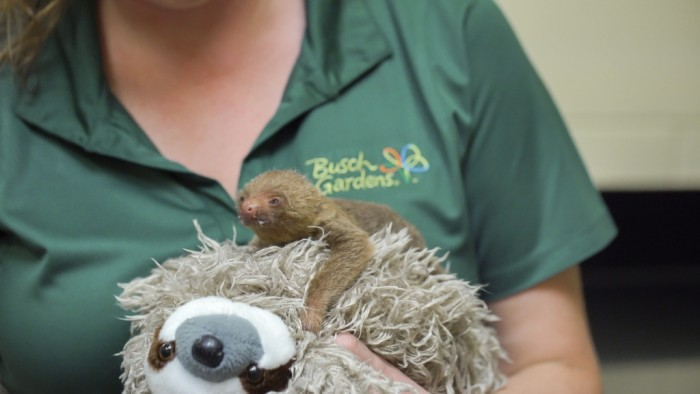 2016_BUSCH_GARDENS_TAMPA_GRISLY_BABY_SLOTH_02
