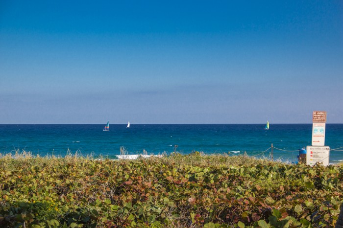 Sailboats on ocean under deep blue sky taken from shore, colorful, tranquil scene