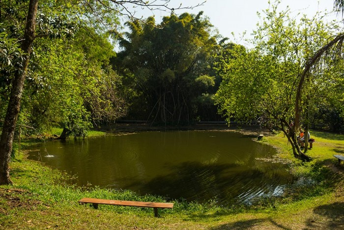 colina-verde-foto-adilson-zavarize-538