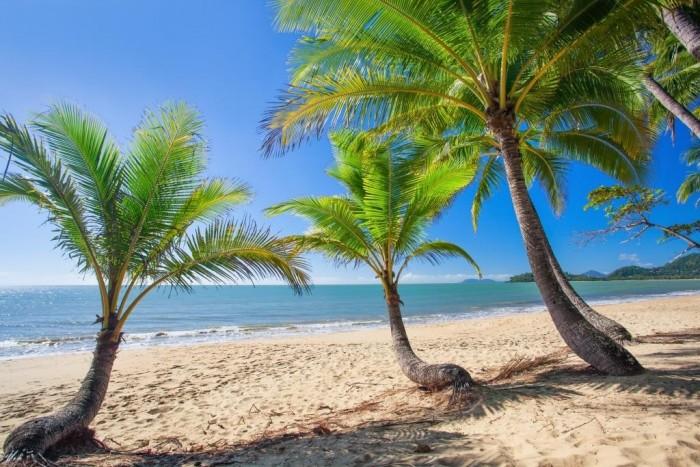 palm-cove-australia