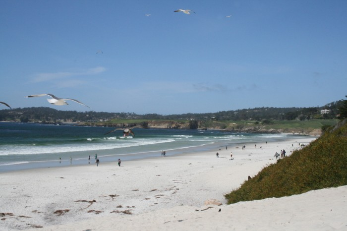 Seagulls in flight and tourists strolling on a sunny day at Carmel City Beach in Carmel, California