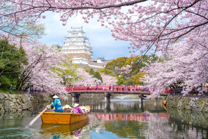 Himeji, Japan - April 3, 2016: Himeji Castle with beautiful cherry blossom in spring season. It  is regarded as the finest surviving example of prototypical Japanese castle architecture