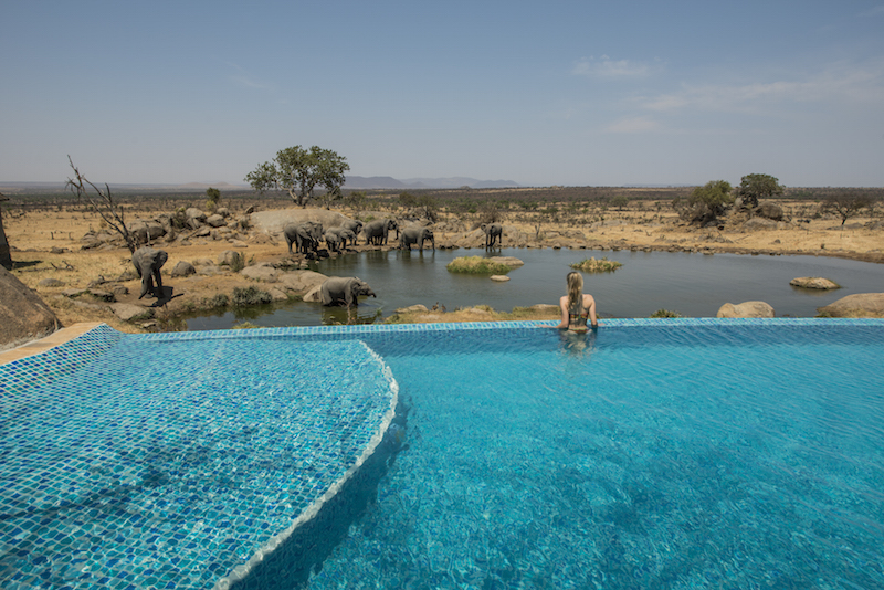 Tanzânia, safari no Serengeti e praias em Zanzibar! | Qual Viagem