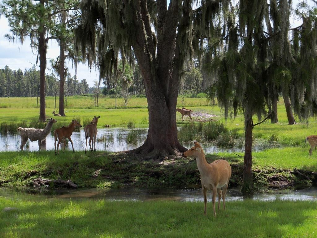 safari-wilderness-ranch-100_4729