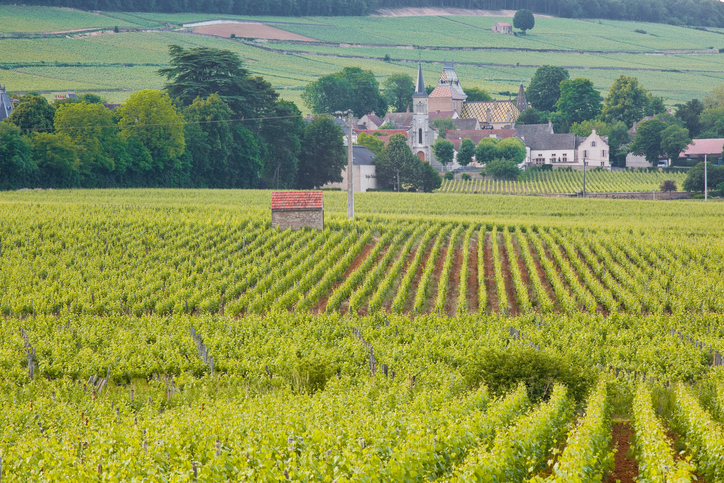 Looking through the vineyards towards Aloxe-Corton in Burgundy.