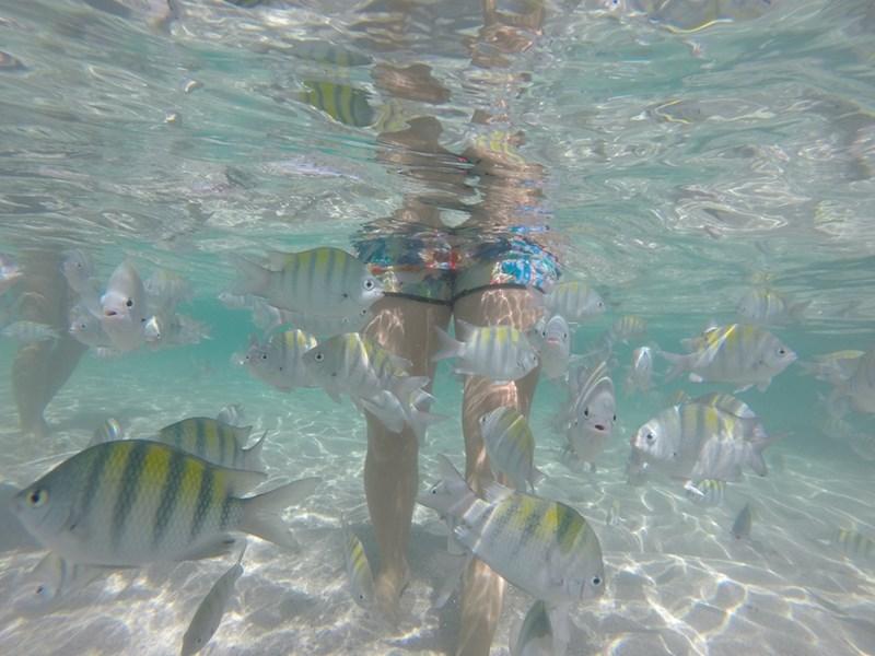 passeio-volta-ilha-de-boipeba-mergulho