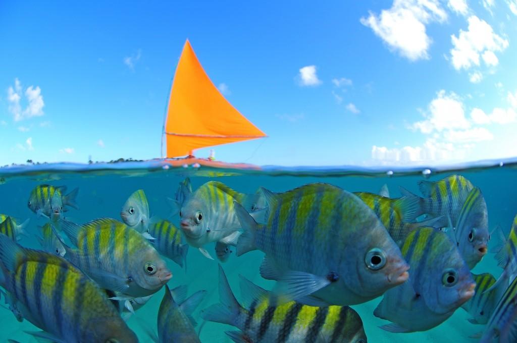 jangada-e-peixes Porto de Galinhas Convention & Visitors Bureau