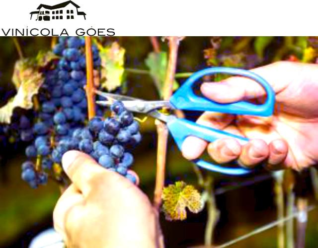 vinicola-goes