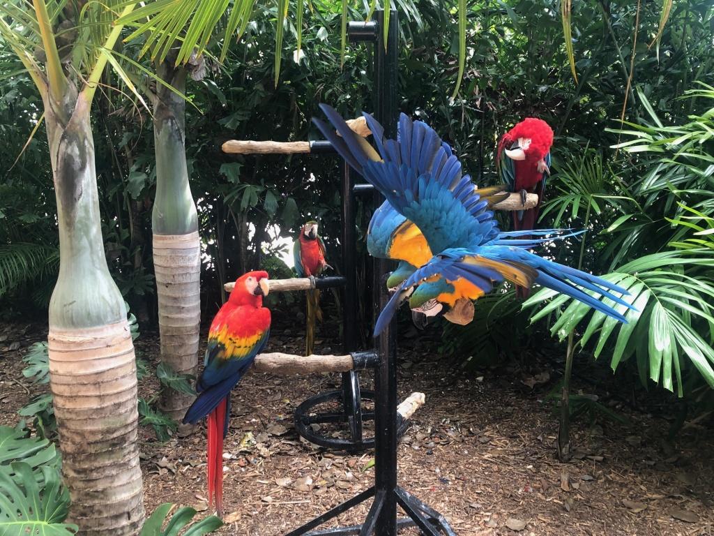 araras do Jungle Island