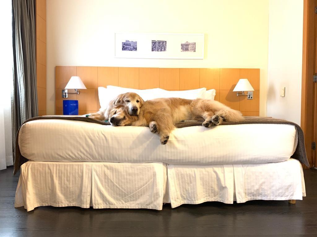bm-no-conforto-do-hotel-tryp-jesuino-aruda