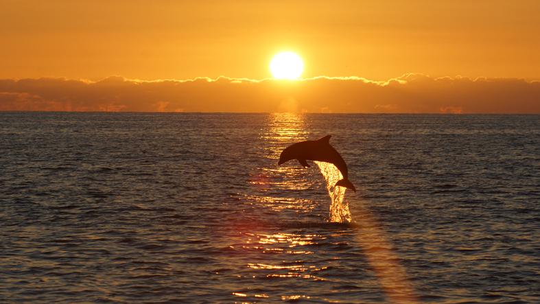 Golfinho avistado em Sanibel. Foto por iStock / savilleization