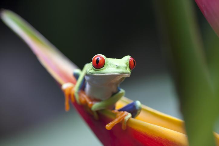 Foto por iStock / carlosdiazgar