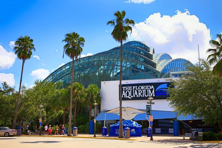 Florida Aquarium. Foto por iStock / csfotoimages