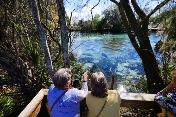 Visitantes admiram os peixes-boi no Three Sisters Springs Center. Foto por Discover Crystal River Florida