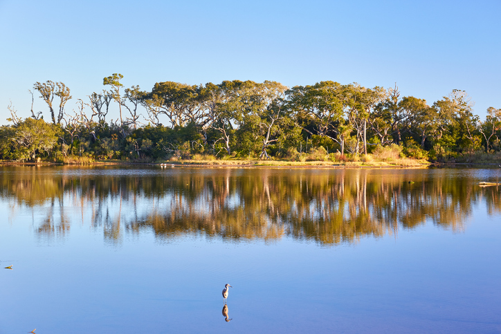 Big Talbot Island State Park. Foto por iStock / (c) Sean Board