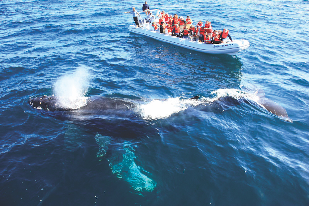 whale-watching-05